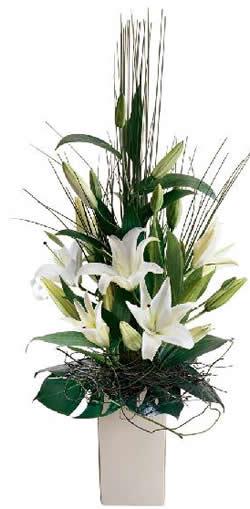 Diseño y Fabricacion de cajas de empaque para florerias y plantas vivas